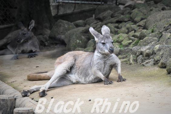 ケンガワラルー02 多摩動物公園