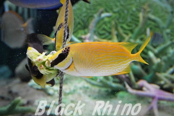 マジリアイゴ02 名古屋港水族館