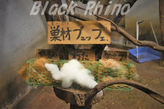 アフリカヤマネ03 豊橋総合動植物公園