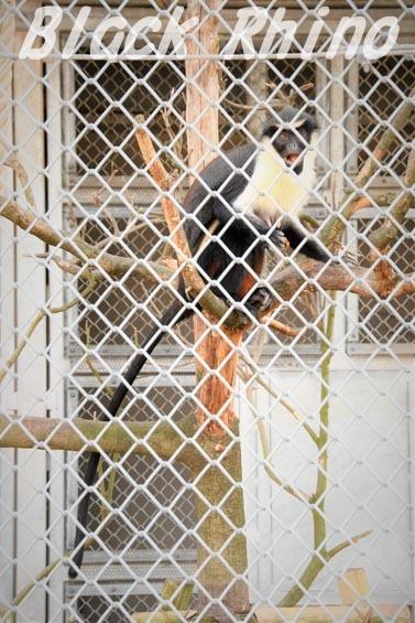 ダイアナモンキー05 豊橋総合動植物公園