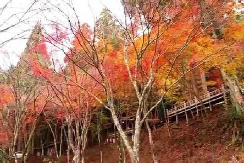 京都 高雄山 神護寺の紅葉6