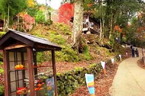京都 高雄山 神護寺の紅葉5