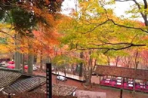 京都 高雄山 神護寺の紅葉8