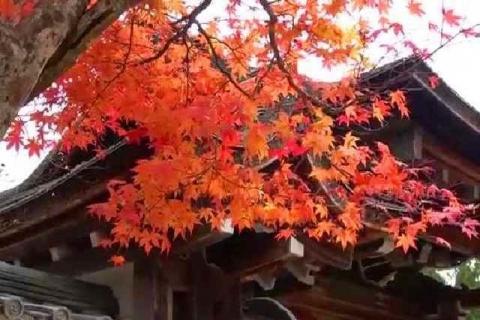 京都 高雄山 神護寺の紅葉13