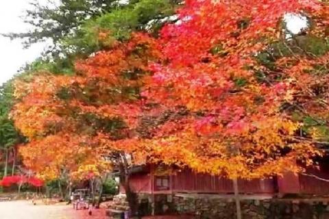 京都 高雄山 神護寺の紅葉14