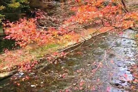 京都 高雄山 神護寺の紅葉27