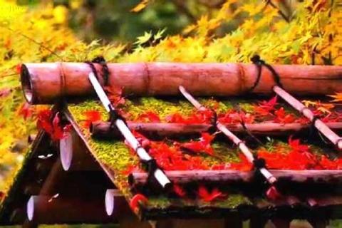 京都観光 南禅寺塔頭 天授庵の紅葉9