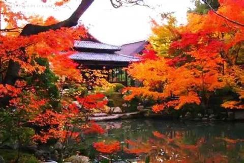 京都観光 南禅寺塔頭 天授庵の紅葉7