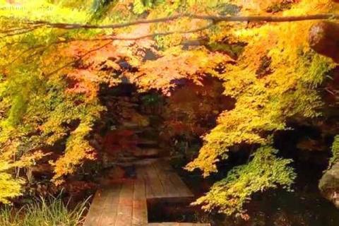 京都観光 南禅寺塔頭 天授庵の紅葉6