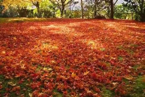 三千院の紅葉21