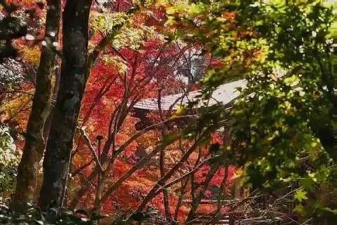 三千院の紅葉23