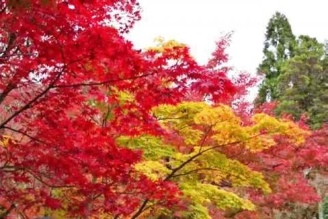 京都永観堂17