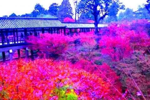 京都の紅葉東福寺7