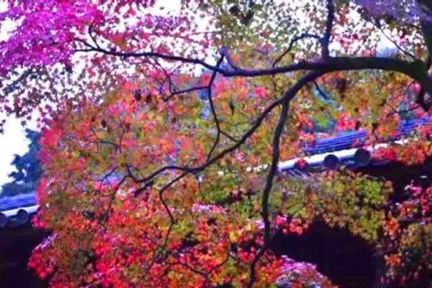 京都の紅葉東福寺6
