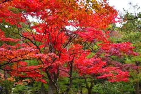 京都金閣寺2