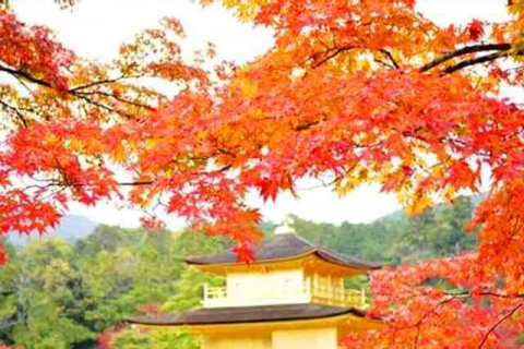 京都金閣寺 (2)