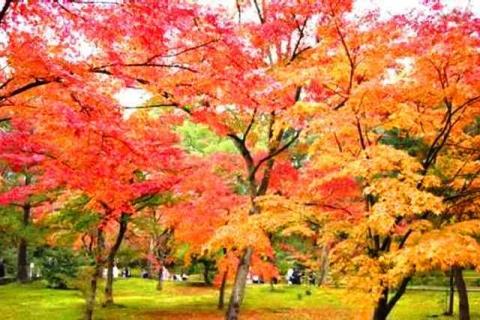 京都金閣寺5