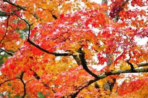 京都金閣寺4