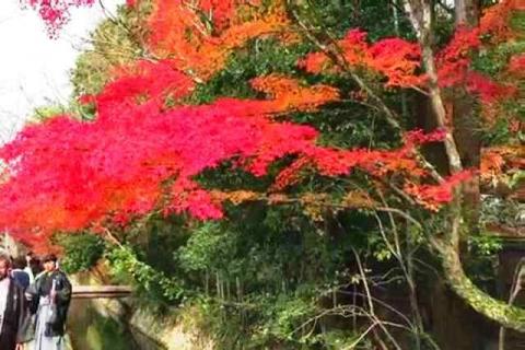 京都の紅葉 哲学の道3
