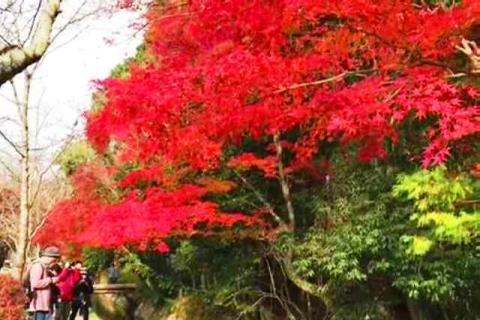 京都の紅葉 哲学の道
