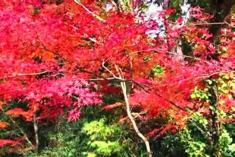 京都の紅葉 哲学の道2