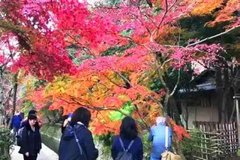 京都の紅葉 哲学の道6