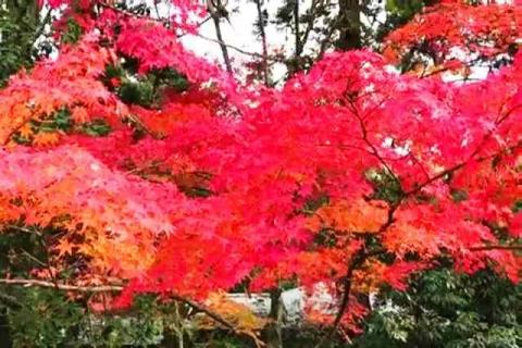 京都の紅葉 哲学の道4