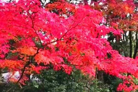 京都の紅葉 哲学の道5