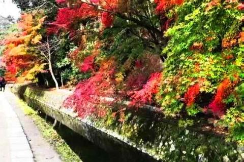 京都の紅葉 哲学の道9