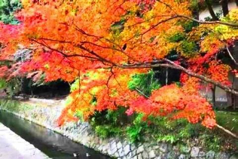 京都の紅葉 哲学の道7
