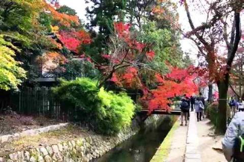 京都の紅葉 哲学の道8