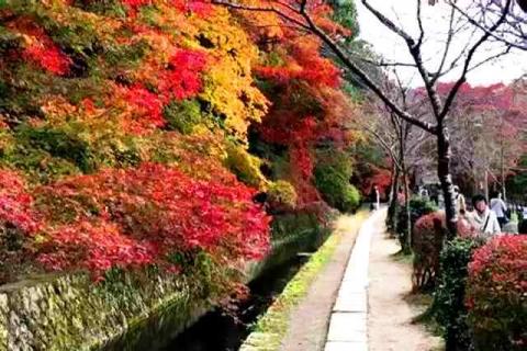 京都の紅葉 哲学の道11