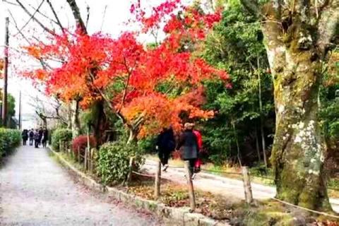 京都の紅葉 哲学の道12