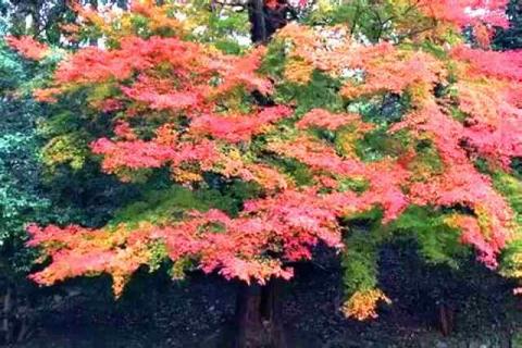 京都の紅葉 哲学の道15