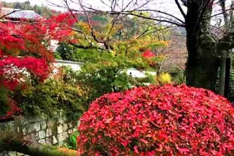 京都の紅葉 哲学の道14