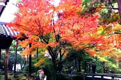 京都の紅葉 哲学の道18
