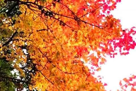 京都の紅葉 哲学の道17
