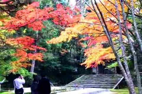 京都の紅葉 哲学の道16