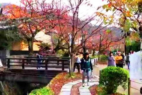 京都の紅葉 哲学の道20