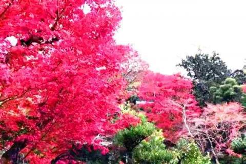 京都の紅葉 哲学の道19