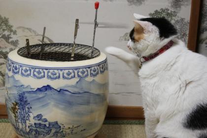 チャコと火鉢