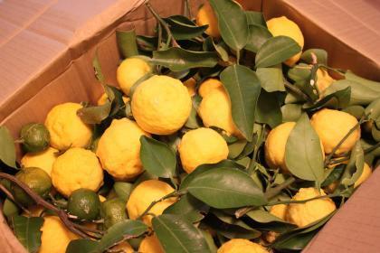 柚子 いっぱい