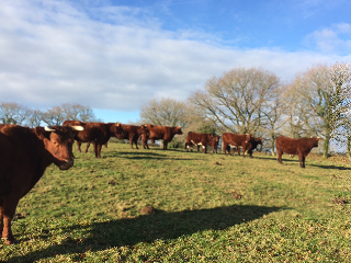 Vaches 20190203