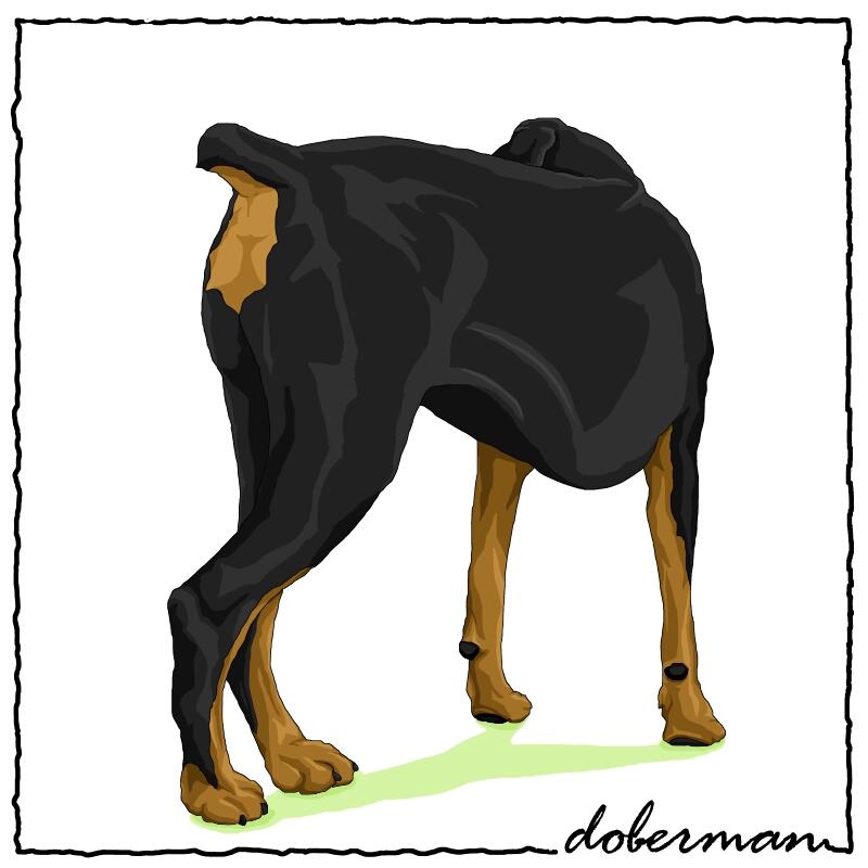 Doberman4.jpg