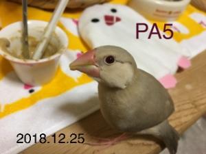 ひかり50日目
