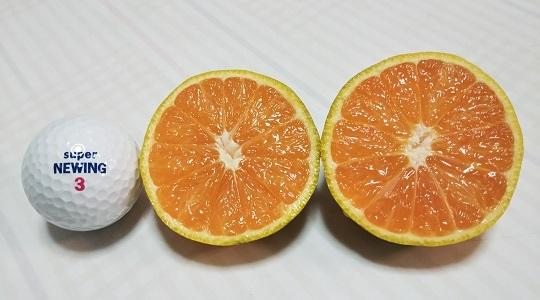 収穫ミカン(輪切り)