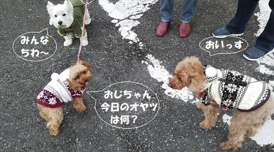 新春の散歩挨拶
