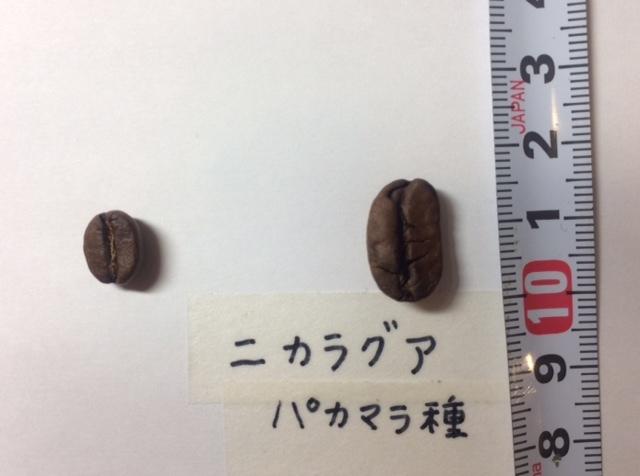 ニカラグア 豆