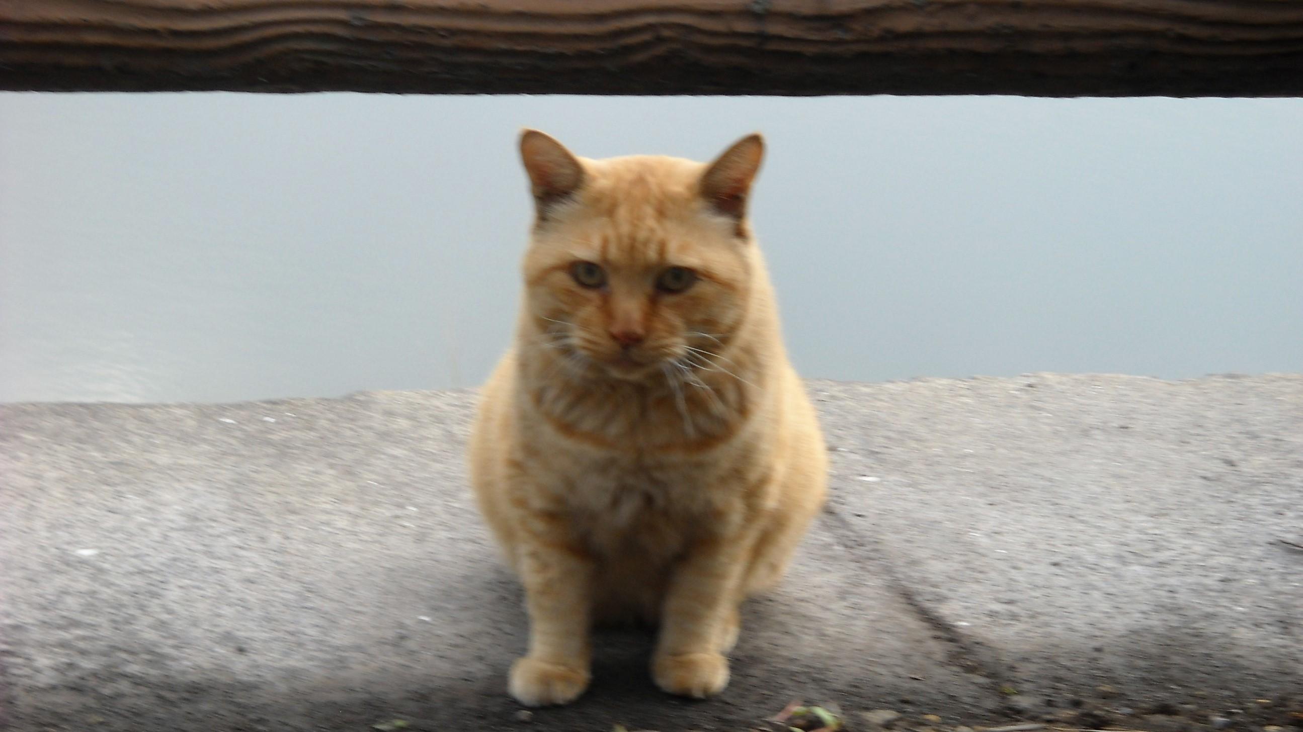 見つめる茶虎猫