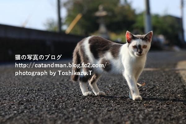IMG_0057s.jpg